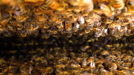 Oh that's a lotta honeybees…