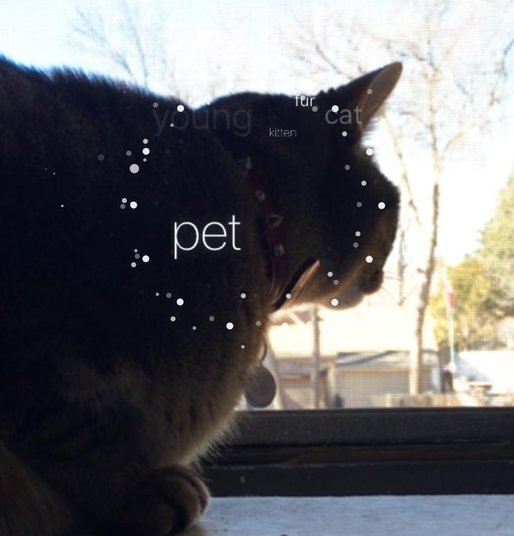 Blippar-Cat